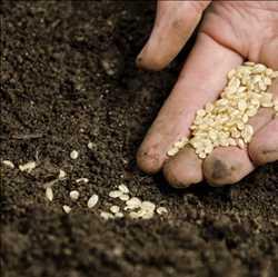 Marché mondial des graines biologiques