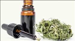 Marché mondial de l'huile de cannabis Indica