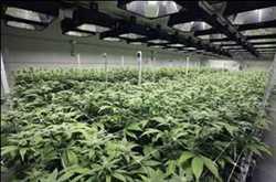 Marché mondial des déshumidificateurs commerciaux au cannabis