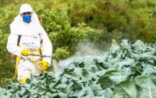 Marché mondial des pesticides biologiques